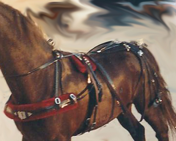Single Horse Carriagebuggy With Seats Disc Brakes And Full ... |Horse Buggy Harness