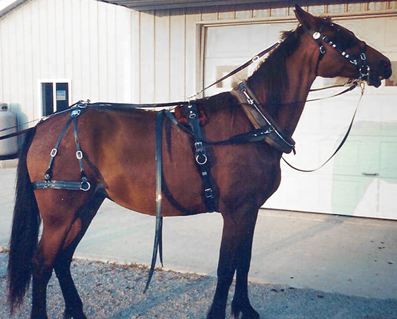 Horse Harness, Horse Collars, Horse Hames, & Harness Parts