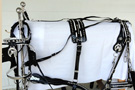 Spotted Trimmed In White Draft Horse Harness