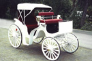 Horse Drawn White Victoria Carriage